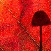 Rode schaduw